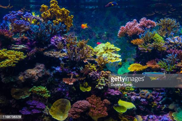 colorful fishes and corals in the aquarium - soft coral stock pictures, royalty-free photos & images