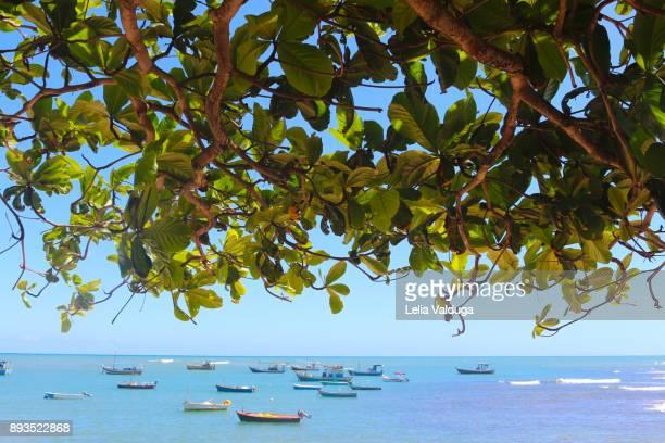 Colorful fishing boats moored. - Praia do Forte - BA -