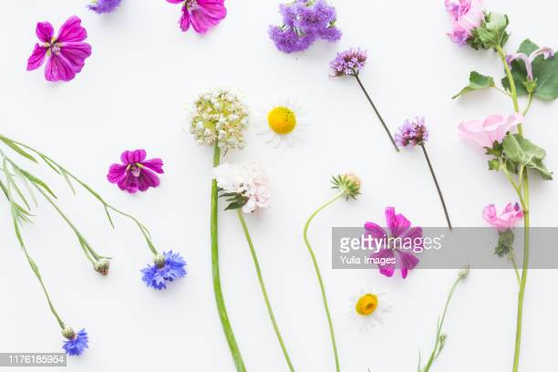 colorful flat lay of dainty summer flowers - blütenblatt stock-fotos und bilder