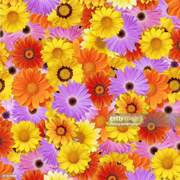 Colorful flower bed XXXL