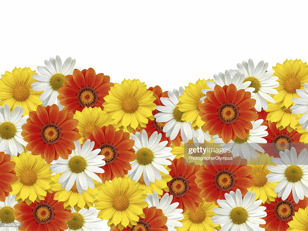 Colorful flower border xxl stock photo getty images colorful flower border xxl stock photo izmirmasajfo