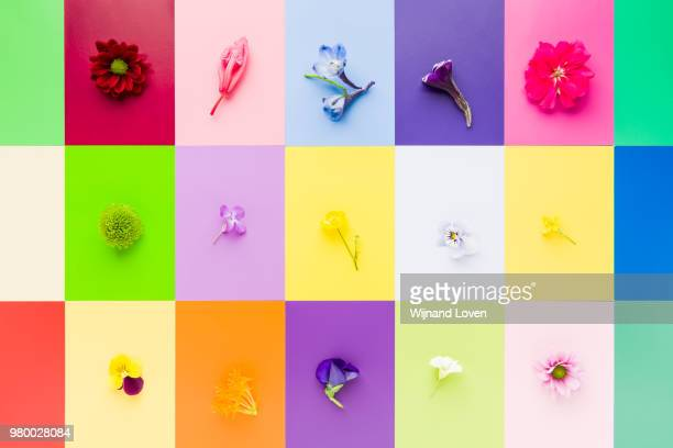 Colorful flower collection - not an ordinary bunch