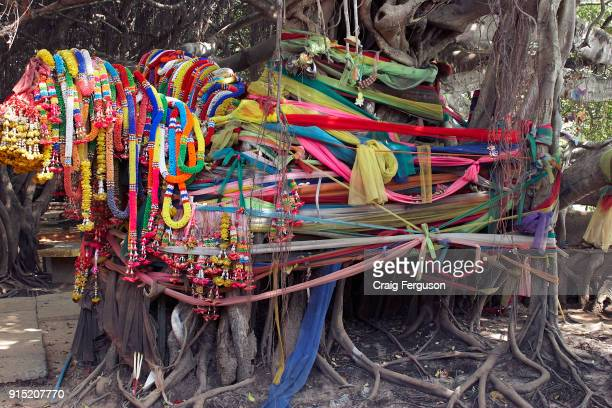 Colorful flower garlands known as phuang malai decorate the 350 year old banyan tree at Sai Ngam The banyon grove covering an area of 1350 square...