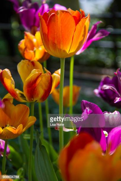Colorful Flower Species