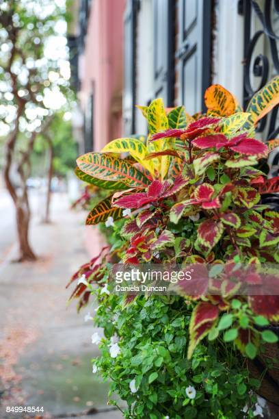 colorful flowerbox in charleston - historic district stock pictures, royalty-free photos & images