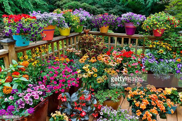 colorful flowers and pots on deck - flowerbed stock pictures, royalty-free photos & images
