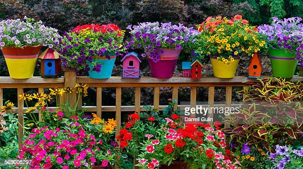 Colorful flowers and pots