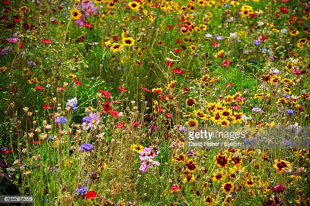 colorful flowers blooming in park - meadow stock pictures, royalty-free photos & images