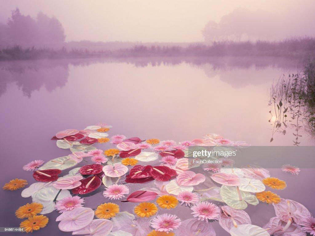 Frances Callier pics