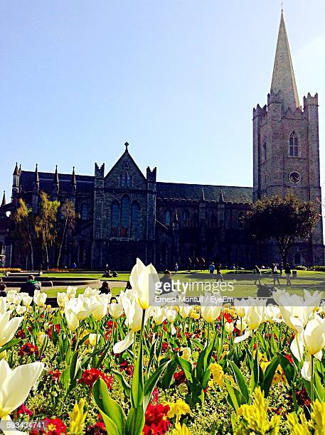 Colorful Flowers Growing In Garden Near St Patricks Cathedral