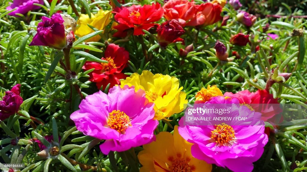 colorful flowers. happy flowers : Stock Photo