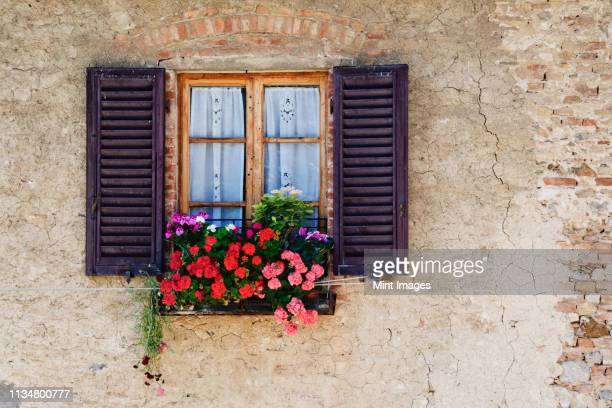 colorful flowers in window flower box - サンジミニャーノ ストックフォトと画像