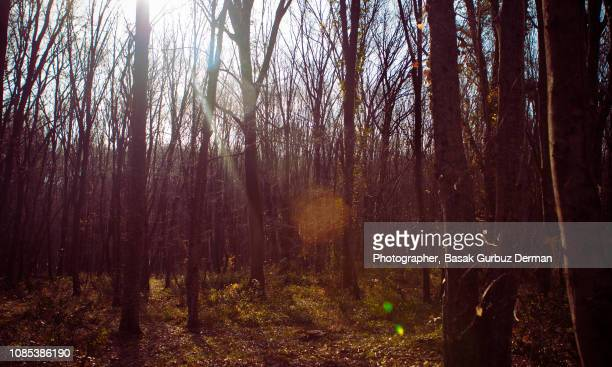 Colorful forest in winter under beautiful sunlight