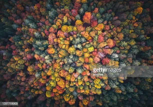 färgglada skog - trädtopp bildbanksfoton och bilder