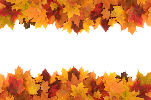 Colorful frame made of of fallen maple autumn leaves on white background 1049285524