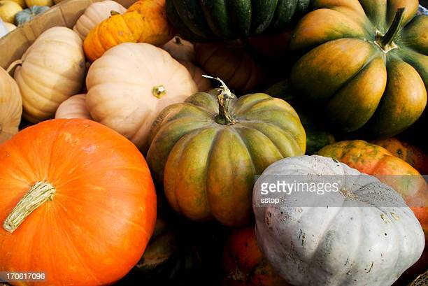 Coloré Courge
