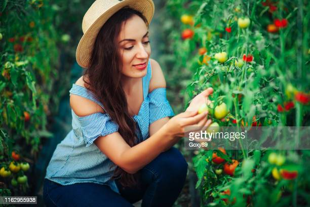 colorful greenhouse - green fingers stock pictures, royalty-free photos & images