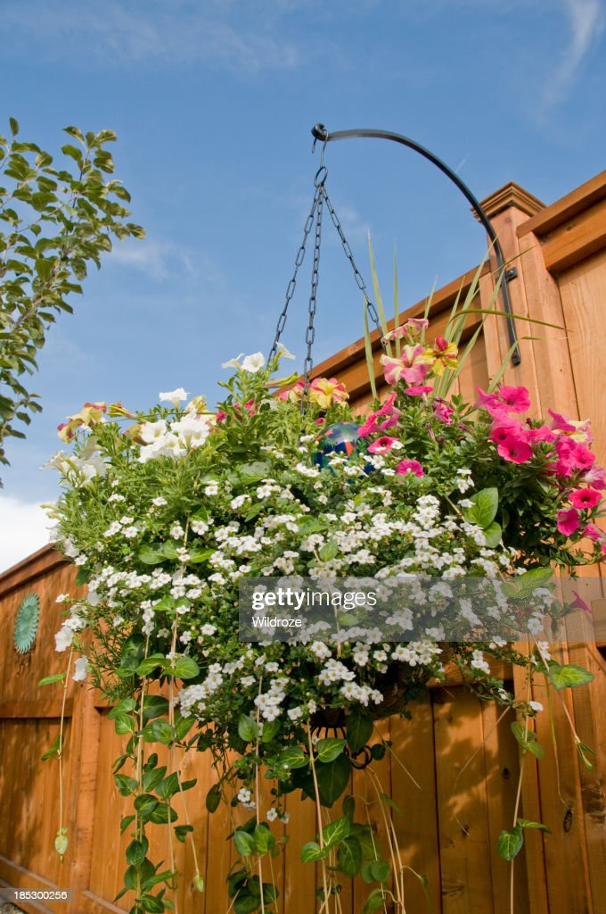 Colorful Hanging Basket Of Flowers In Backyard High-Res ...