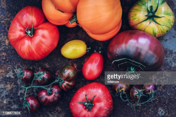 colorful heirloom tomatoes fresh from my organic country garden - farm to table stock photos and pictures