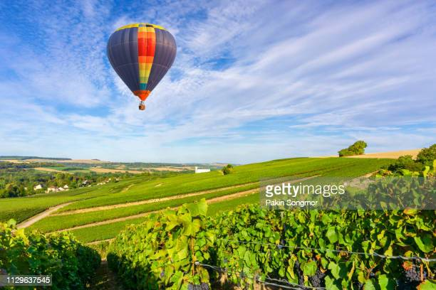 colorful hot air balloons flying over champagne vineyards at sunset montagne de reims - campania stock pictures, royalty-free photos & images