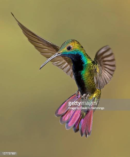 Colorful Humming bird