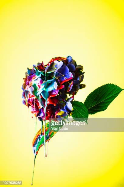 Colorful ink painted hydrangea