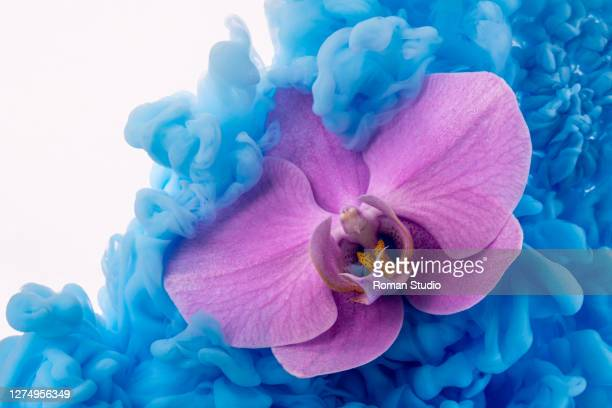 colorful ink swirling in water.  orchid underwater - curve stock pictures, royalty-free photos & images
