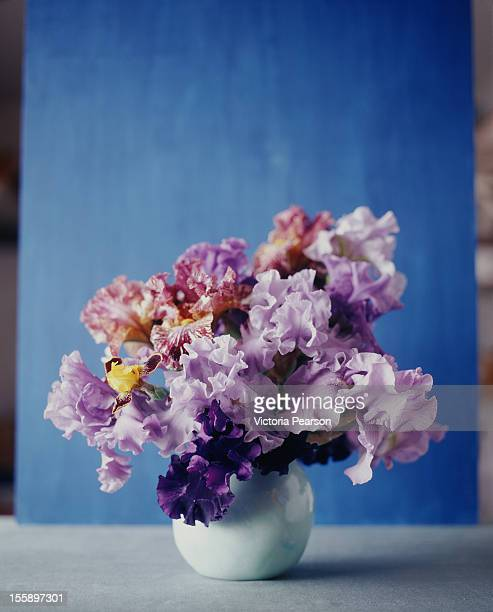 Colorful Irises in a white vase.