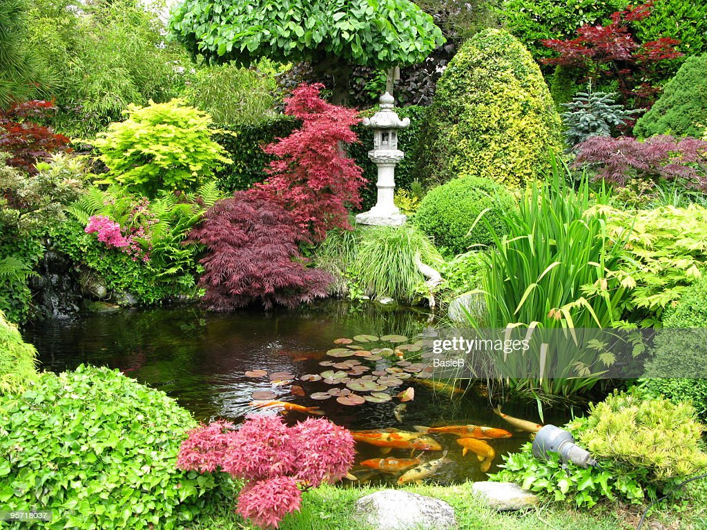 Colorful Japanese Garden With Koi Fish Pond Stock Photo | Getty Images