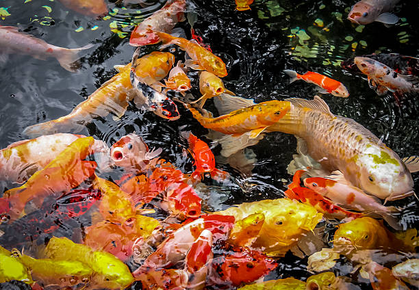 koi fish meditation and ghosts