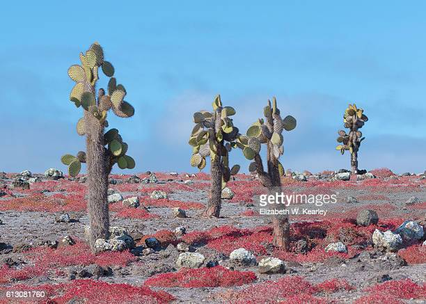 colorful landscape of santa cruz island - santa cruz island galapagos islands stock pictures, royalty-free photos & images