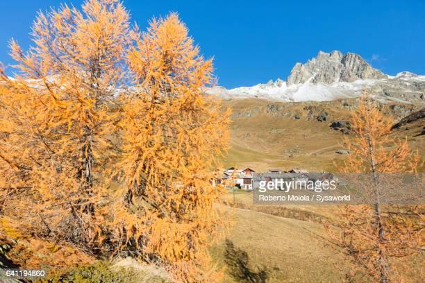 Colorful larches Grevasalvas Switzerland