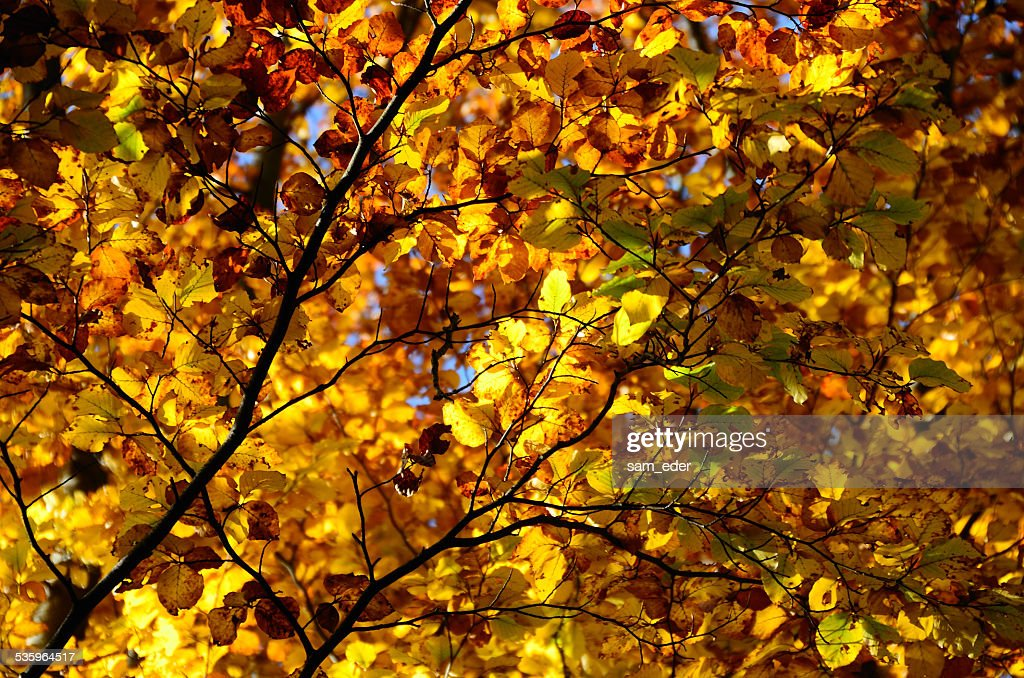 colorful leaves in autumn : Stock Photo