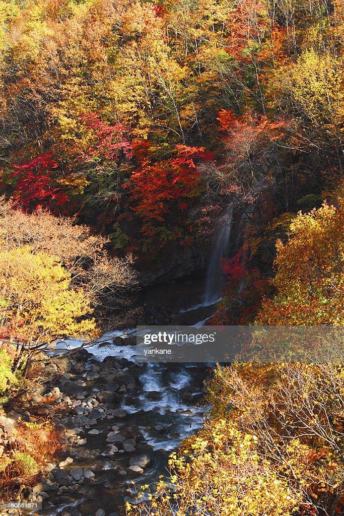Folhas coloridas em Gully Matsukawa : Foto de stock