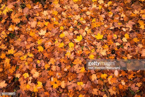 colorful leaves on the forest floor of upper michigan #2 - autumn falls stock pictures, royalty-free photos & images