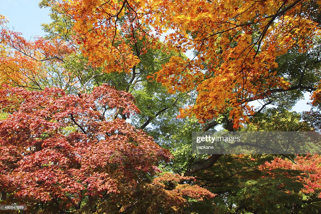 colorful  leaves : Stock Photo