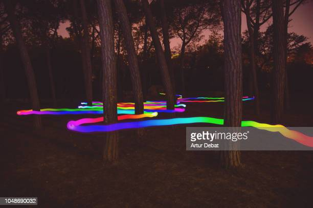 Colorful light trail following the way between pine trees at night.