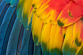 http://www.istockphoto.com/photo/colorful-macaw-plumage-gm611171128-105107049