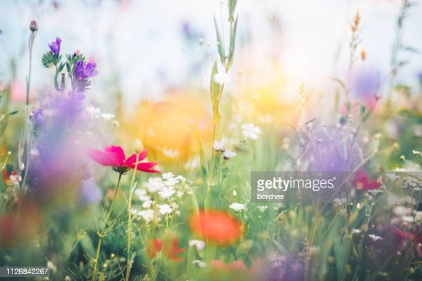 colorful meadow - meadow stock pictures, royalty-free photos & images