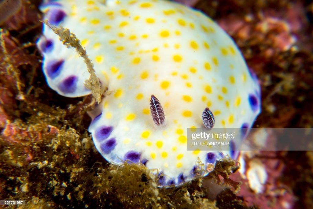 Colorful Nudibranch : Stock Photo