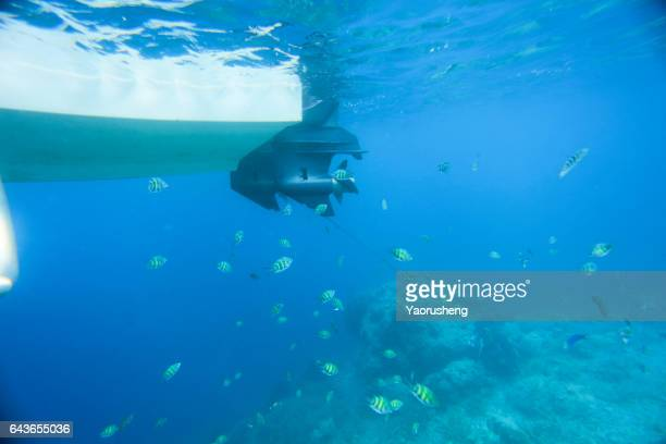 colorful ocean fish underwater in ocean - propeller stock pictures, royalty-free photos & images