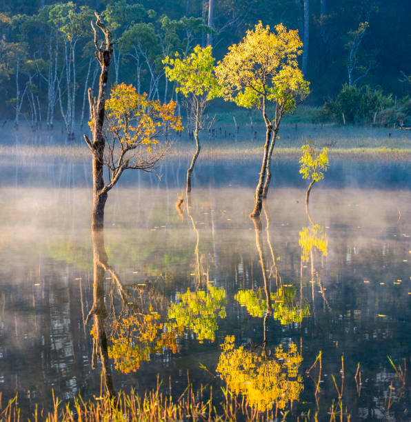 colorful of flooded trees reflection on the fog lake with magical of the light and tranquility scenery at sunrise