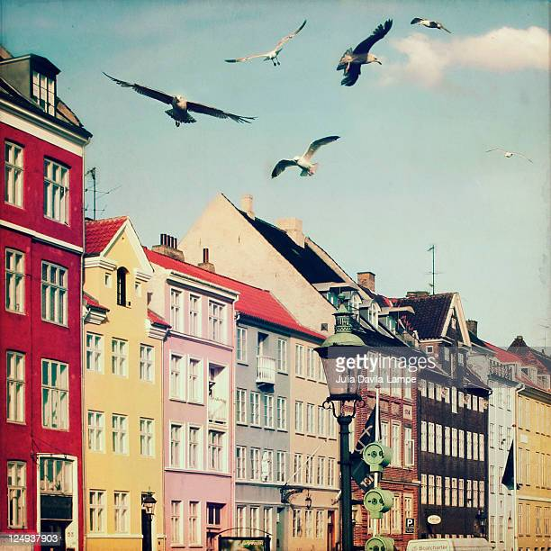 Colorful old houses and wheeling seagulls
