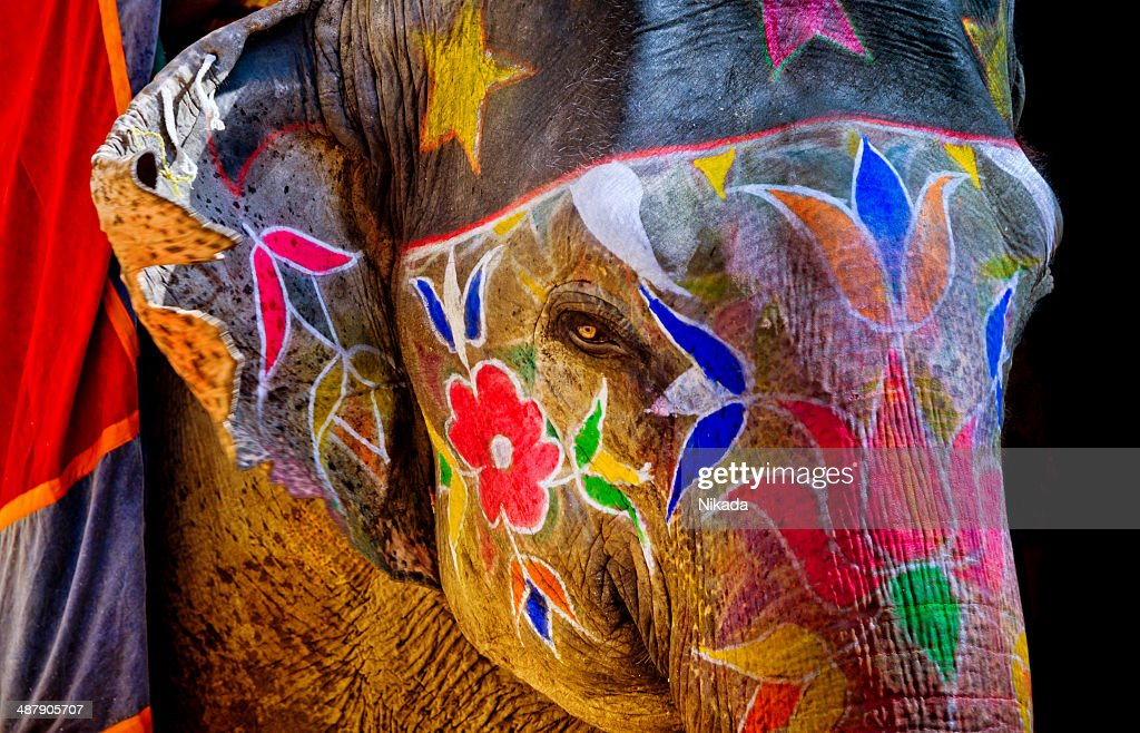 colorful painted elephant in india stock photo getty images