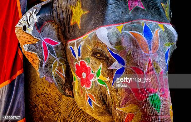 colorful painted elephant in india - indian elephant stock pictures, royalty-free photos & images