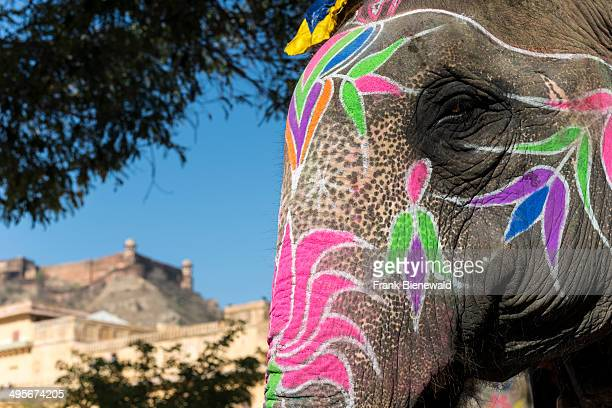 Colorful painted head of an elephant taking tourists on a ride up to the palaces of Amber Fort
