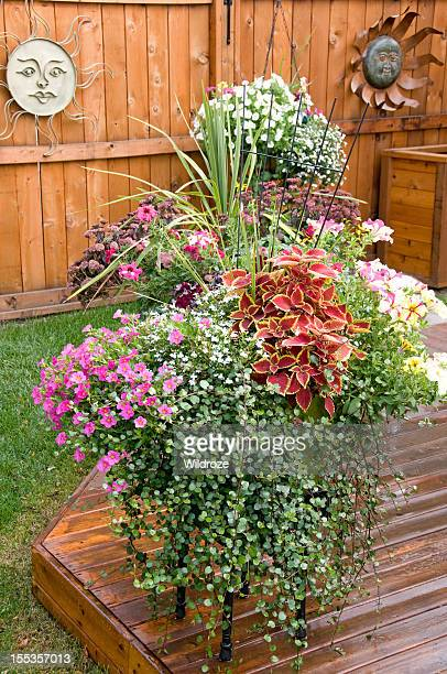 Colorful pots of flowers in backyard