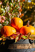 colorful pumpkins gourds wine barrel with