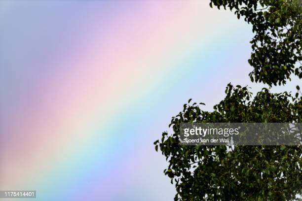 """colorful rainbow spectrum behind a tree with a stormy dark sky in the background - """"sjoerd van der wal"""" stock pictures, royalty-free photos & images"""
