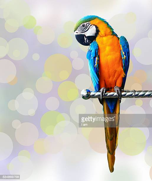 colorful red parrot macaw isolated on white background - オウム ストックフォトと画像